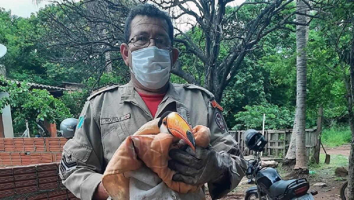 Read more about the article Bombeiros resgatam Tucano em residência no Maria Leite