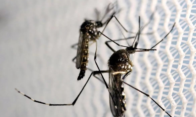 You are currently viewing Pessoas que já tiveram dengue são mais propensas a ter sintomas da covid-19