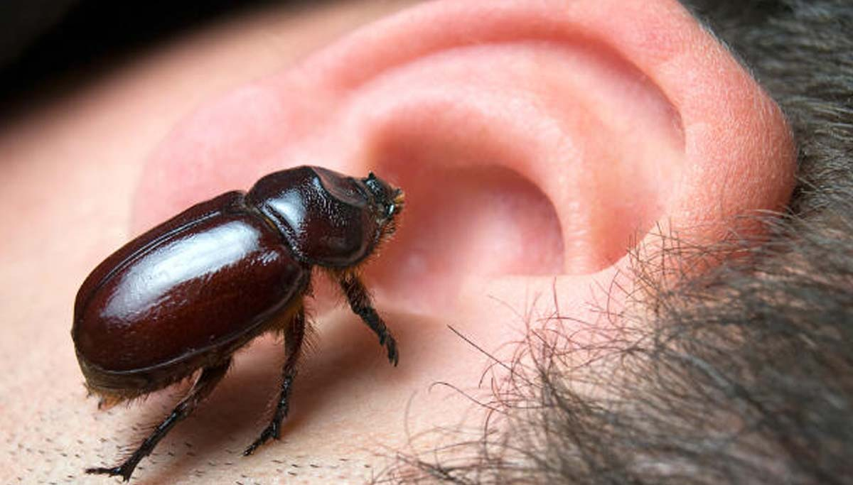 You are currently viewing Bombeiros socorrem mulher com besouro no ouvido em Porto da Manga