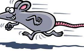 A corrida de ratos