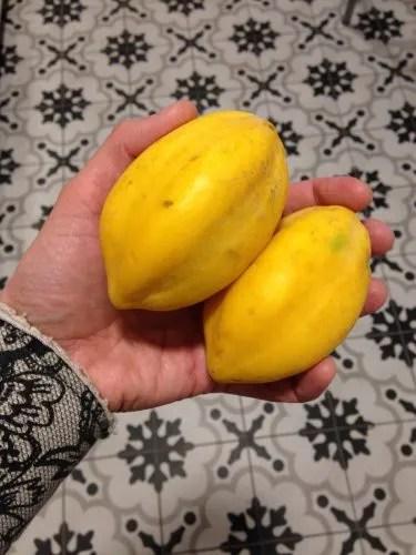 Mountain Papayas