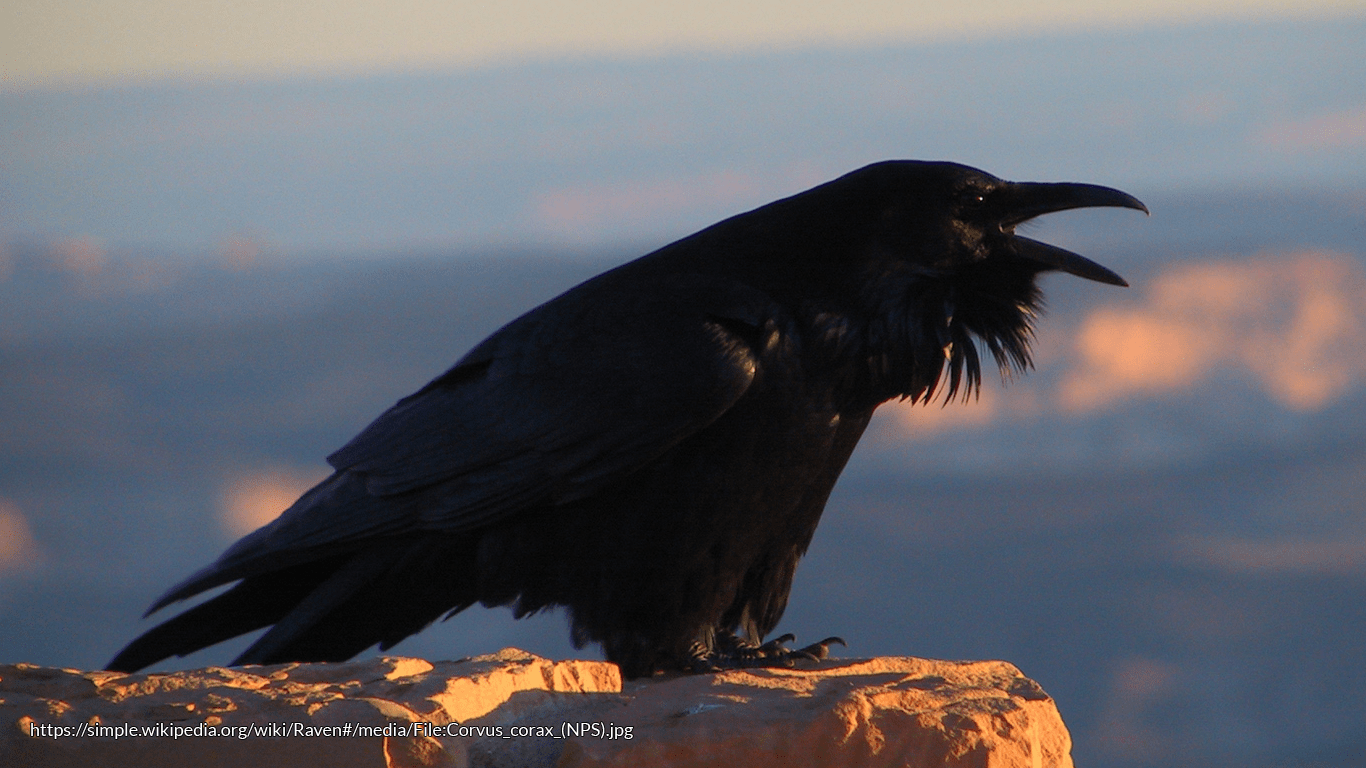 Death Takes Wing Birds And The Folklore Of Death Folklorethursday