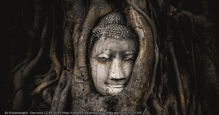 The head of a sandstone Buddha statue nestled in the roots of a fig tree at a temple in Thailand by Siripatwongpin - Own work, CC BY-SA 4.0, https://commons.wikimedia.org/w/index.php?curid=43737356