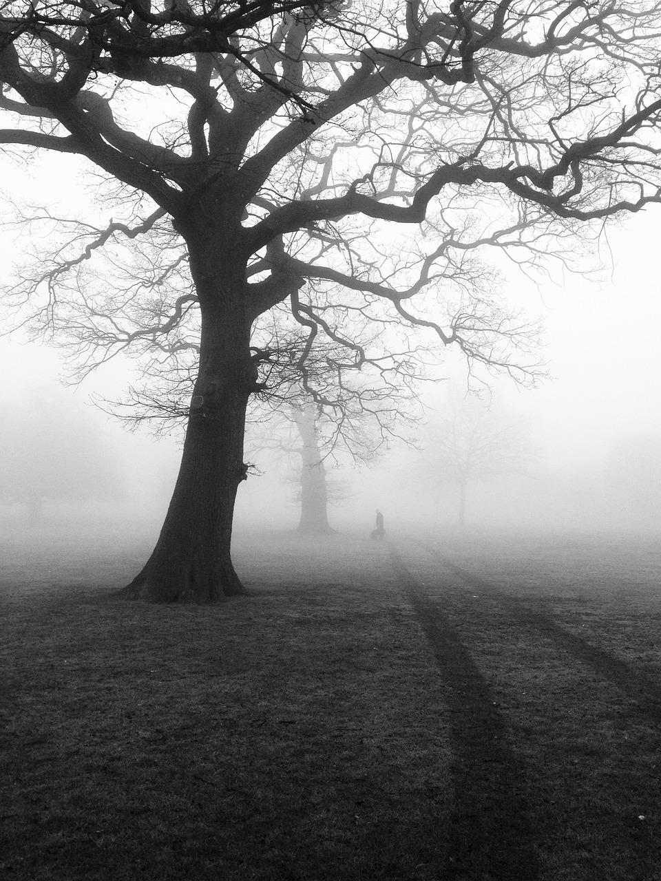 https://pixabay.com/en/trees-mist-fog-eerie-nature-450854/
