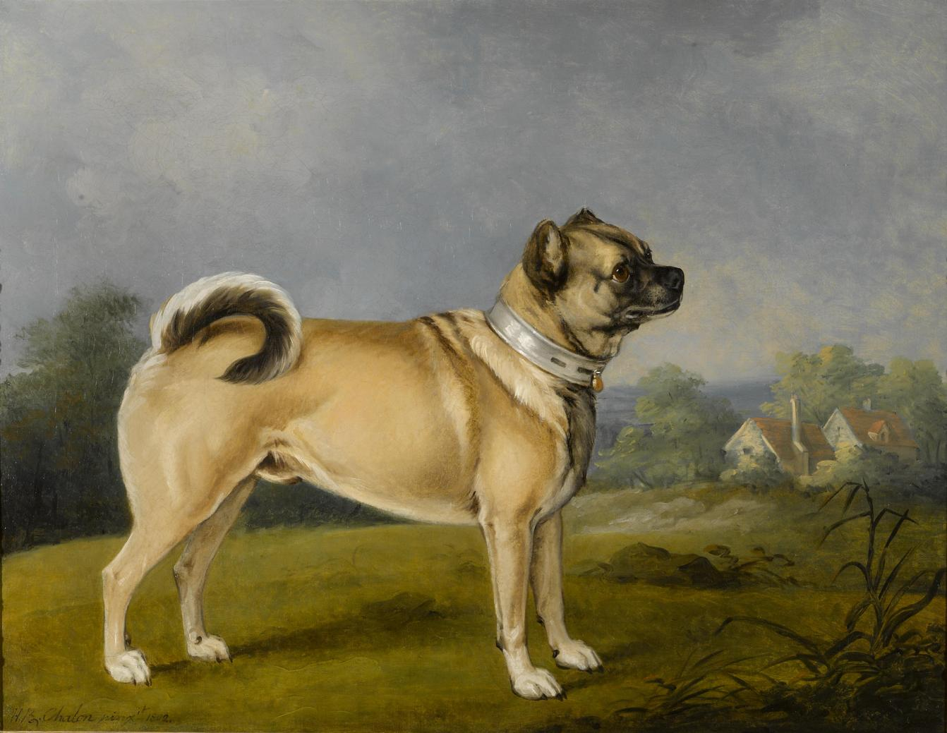Pugs were believed to have healing abilities. A Favorite Pug by Henry Bernard Chalon, 1802. https://commons.wikimedia.org/wiki/File:Henry_Bernard_Chalon_-_A_favorite_pug_(1802).jpg