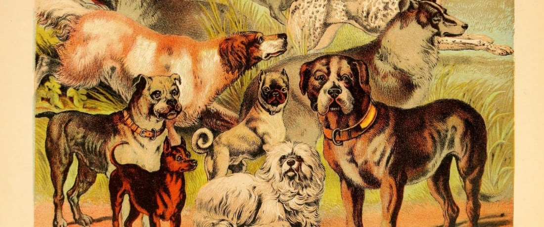 Companion dogs were often believed to have mystical abilities. Dog Illustration from Johnson's Book of Household Nature, 1880.