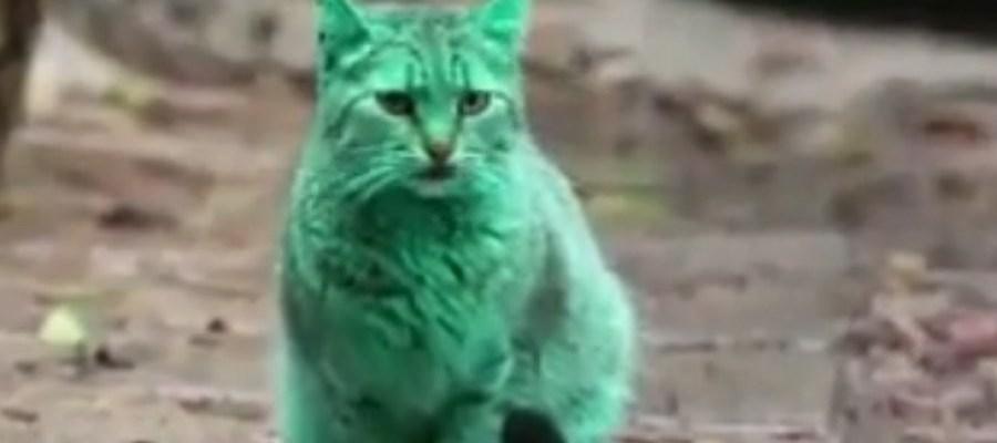 zelena macka
