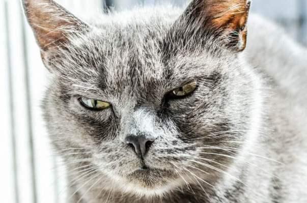 colère et sensorialité