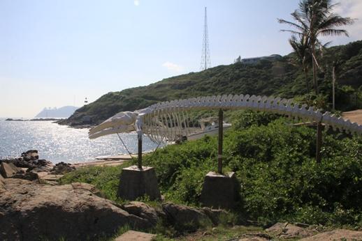 海威骸骨標本