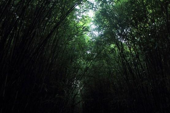 兩旁種滿竹樹的竹洋路