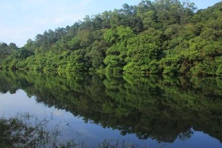 清幽的水塘