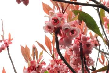 花開得很燦爛