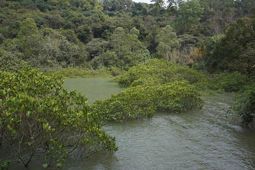 一片紅樹林濕地