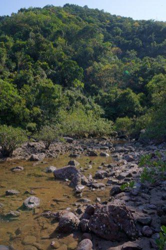 烏洲塘的紅樹林