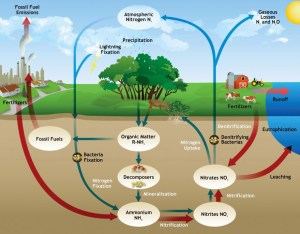 Soil ecology : The essential nutrients and horizons