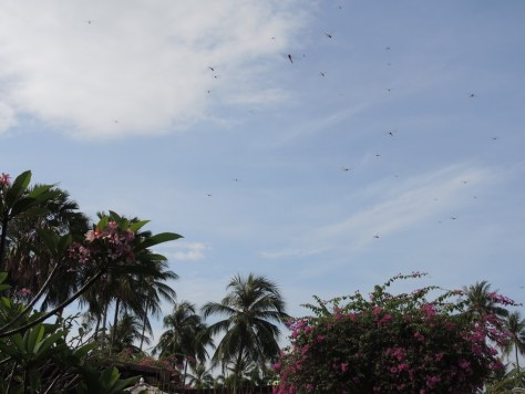 Libellenschwärme