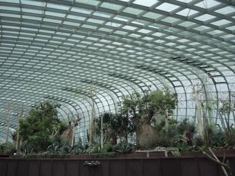 Im zweiten Gewächshaus 'Flower Dome'