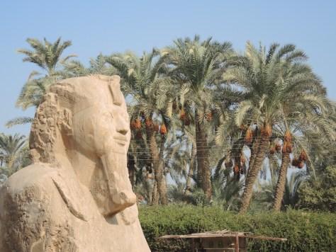 Der Sphinx von Memphis stellt einen unbekannten Pharao dar. Datiert wird er in die Periode 1550 v. Chr. bis 1069 v. Chr.