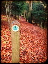 Hartslock Wood