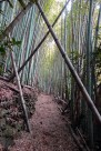 Walking through a bamboo forest on the way to Temple 19