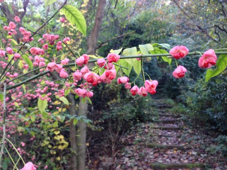 Shikoku 88 Temple Pilgrimage-1240
