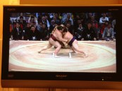 Watching the sumo in my room