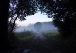 Walking through the morning mist