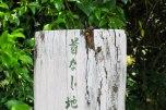 A suzumebachi vesper wasp (on top of the log)