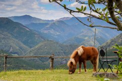 A pony and a stunning view from the garden of Coffee Keyaki Cafe, Takahara