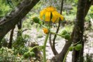 Flowers along the base of Tonda zaka slope, Ohechi route