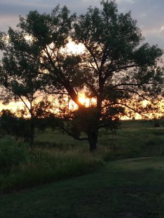 Sunrise through tree at a SD badlands campsite