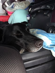 Zip (our dog) sleeping on a car ride