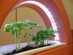 Pratino - la lampada che si crede un giardino erredesign