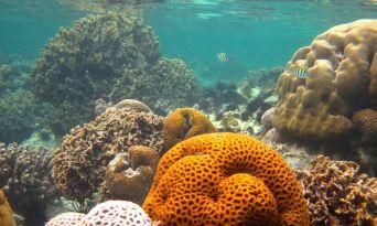 kenya corals