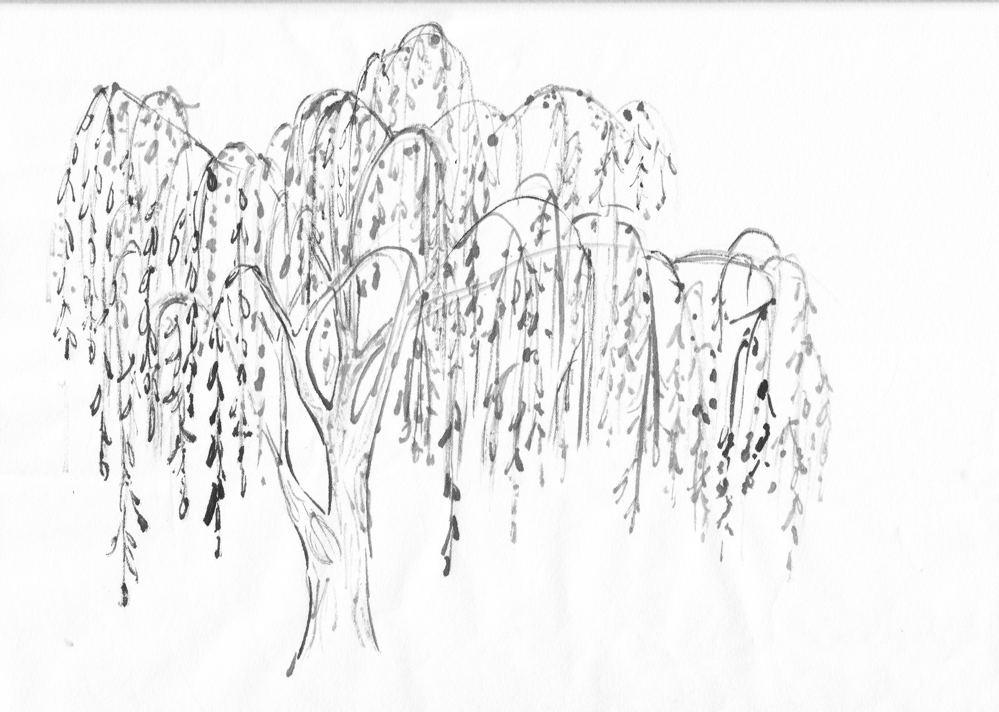Specific Trees Painting Willow