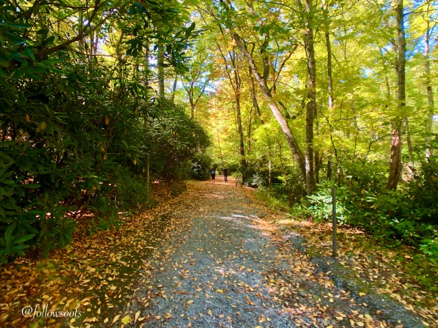 Fall colors on the Glen Burney Trail in Blowing Rock.