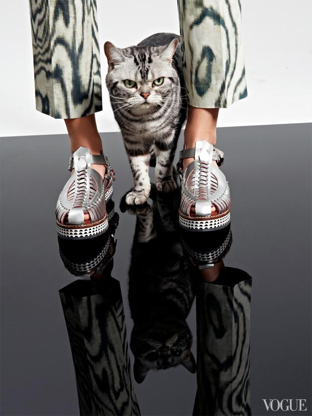 gatinhos-e-sapatos-vogue-17