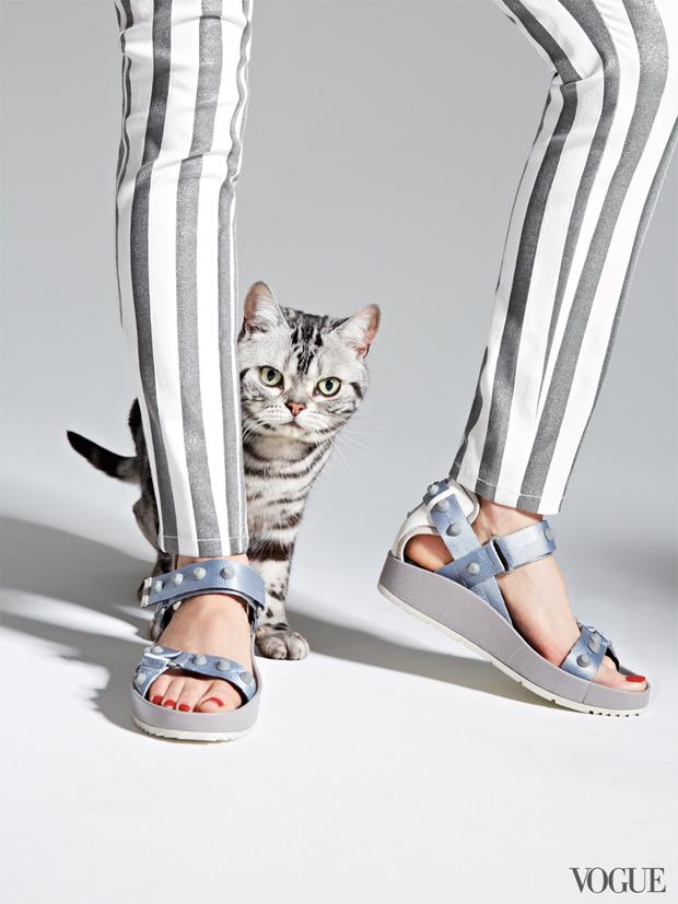 gatinhos-e-sapatos-vogue-31