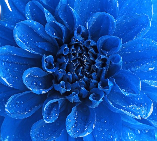 follow the colours azul cor flor shutterstock