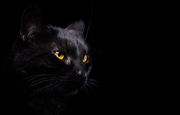Shutterstock significado gato preto