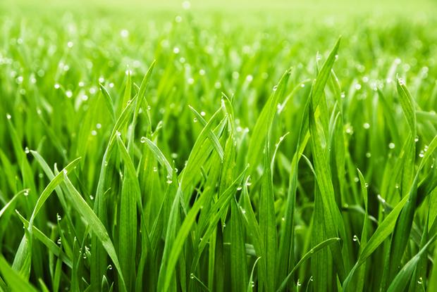 Significado cor verde grama