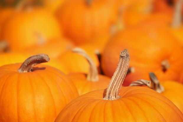 Laranja cores curiosidades abóboras Halloween