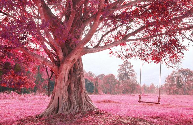 curiosidades cor rosa sonho