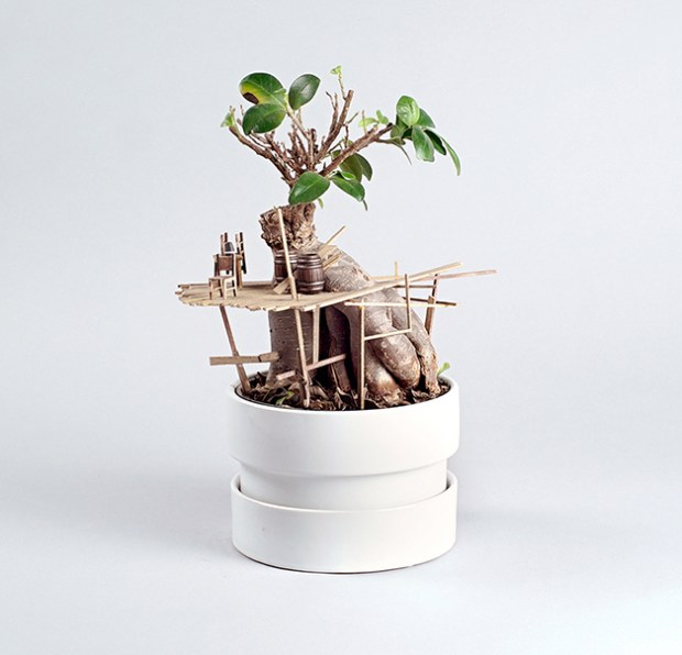 jedediah-corwyn-voltz-somewhere-small-succulent-and-cacti-treehouses-designboom-014