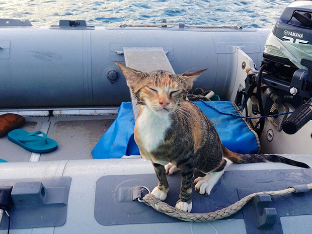 follow-the-colours-gato-barco-viagem-Liz Clark-02