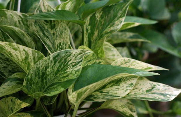 follow-the-colours-plantas-purificam-ar-nasa-04