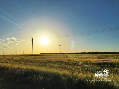Stunning wheat fiels in Kavarna