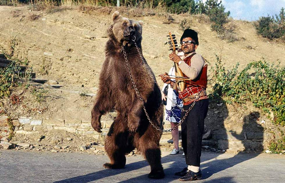 Dancing bear in Bulgaria