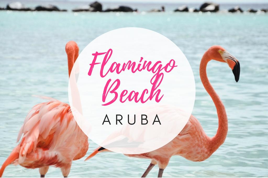 flamingo beach aruba renaissance island
