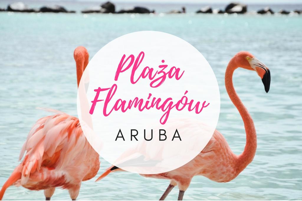 flamingi na Arubie - plaża flamingów